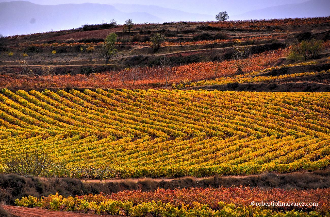 Rioja Wine Trips