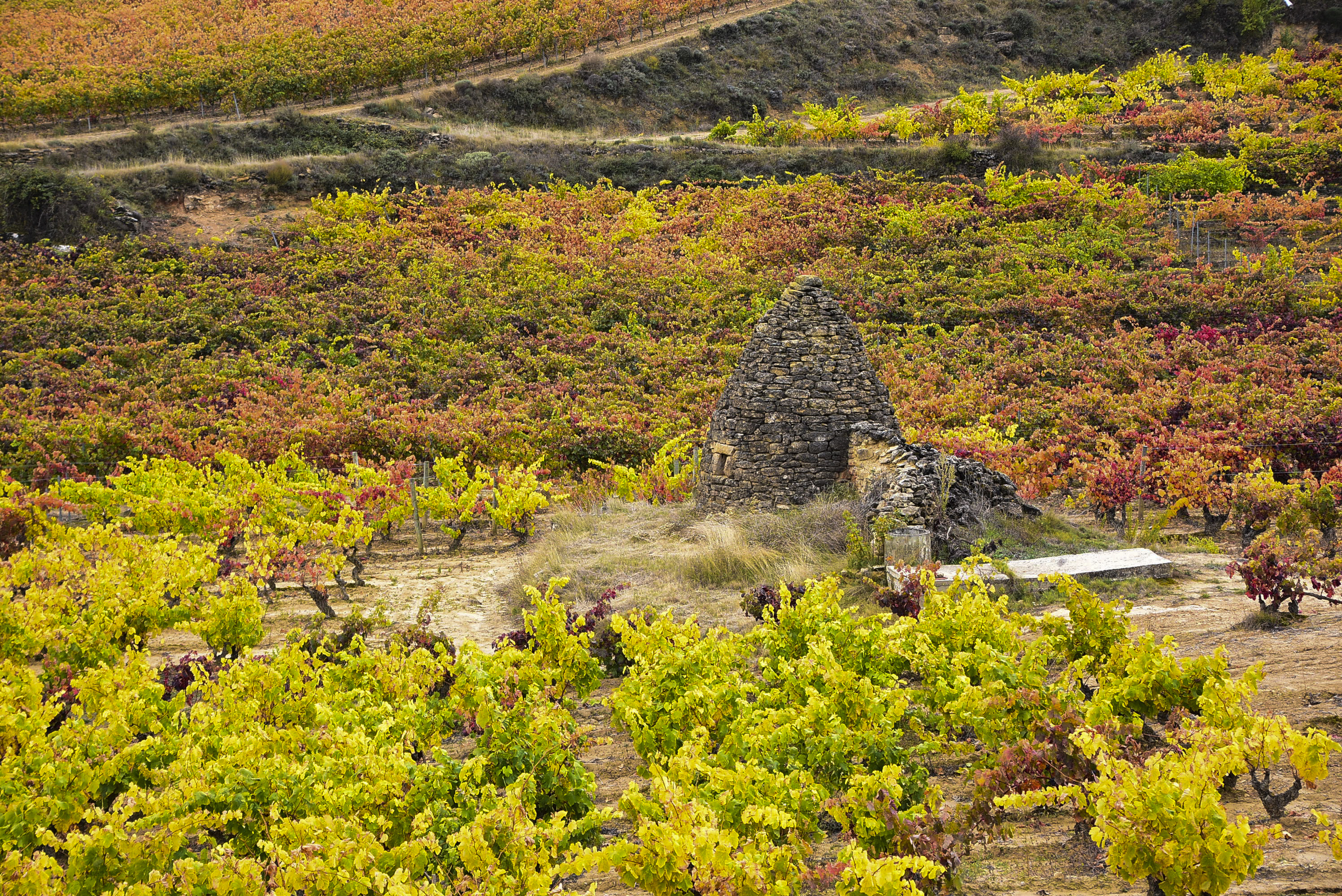 Rioja Wine Tours - Autumn in the fields