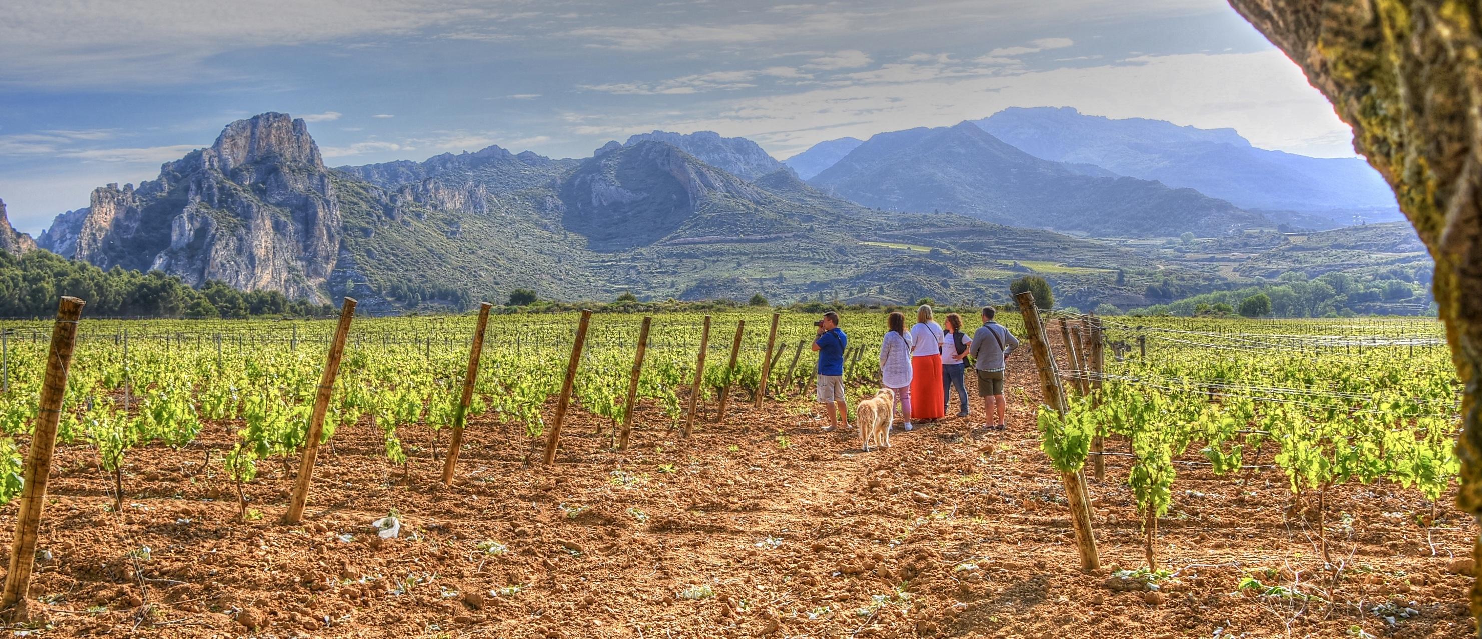 Rioja and Ribera del Duero Wine Tours