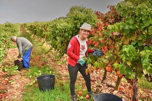 Rebeca Perez - Rioja Like A Native