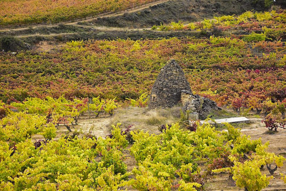 Tours en Rioja y Ribera del Duero