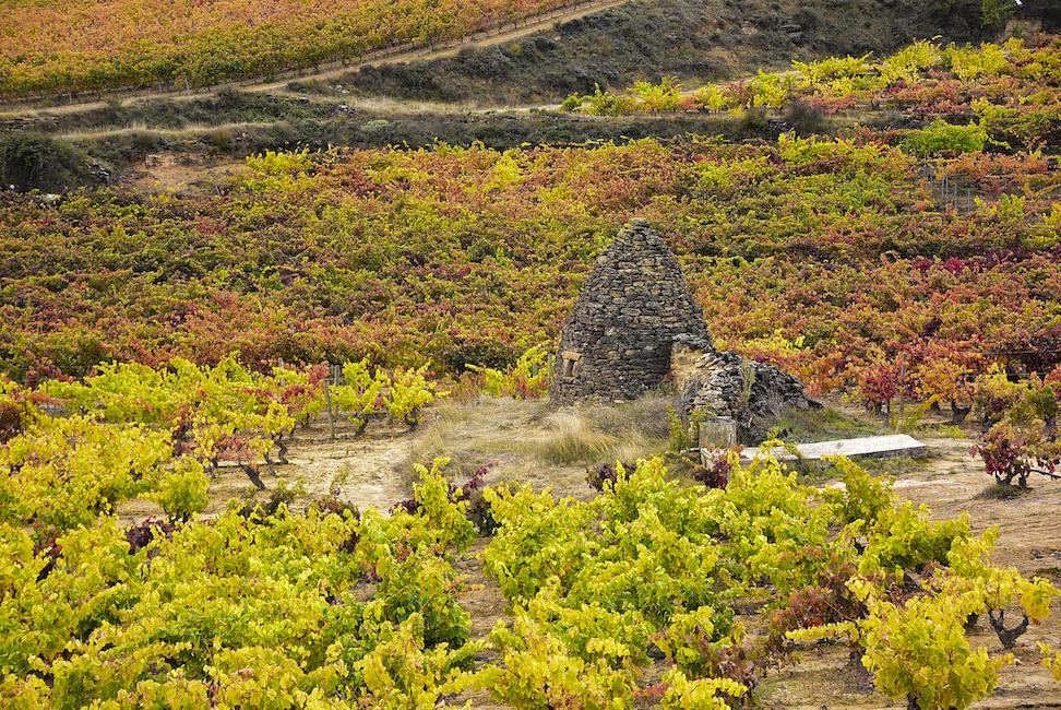 Rioja Wine Tours - Autumn in the fields